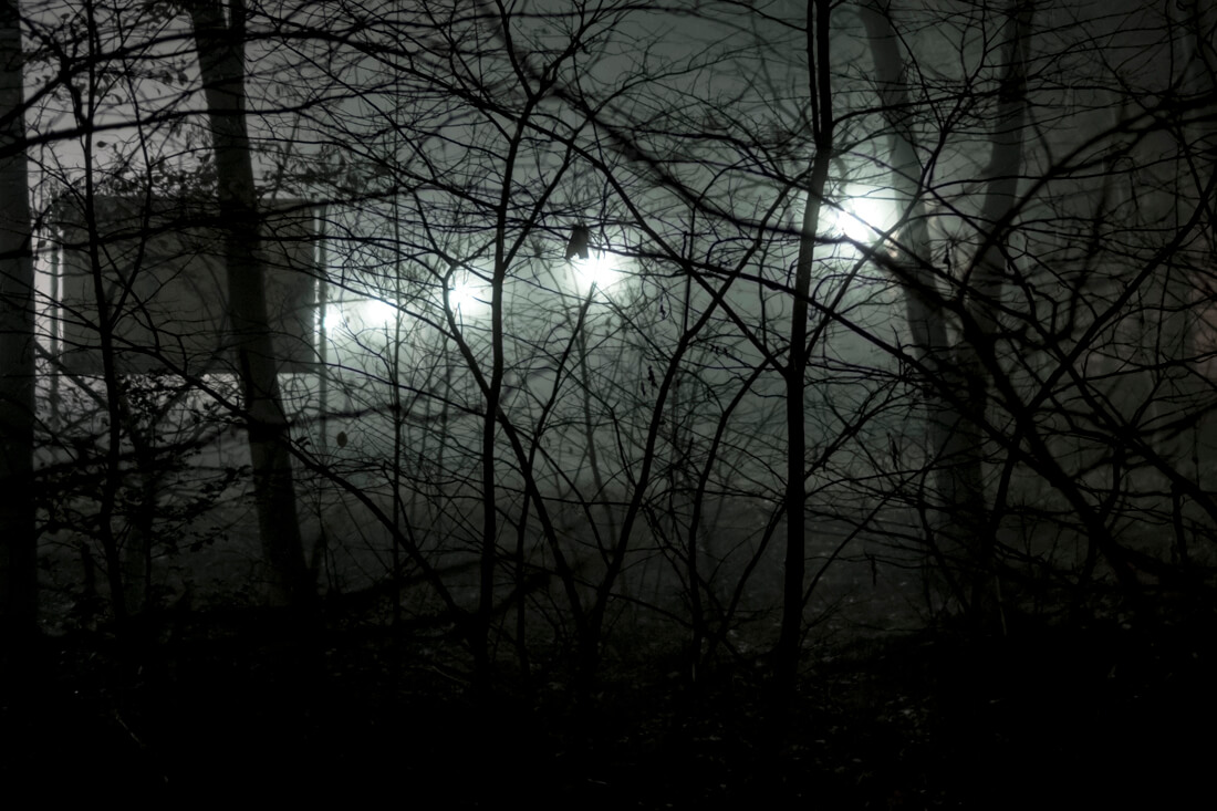 night dive 5, digital photograph by Sarah Janssen